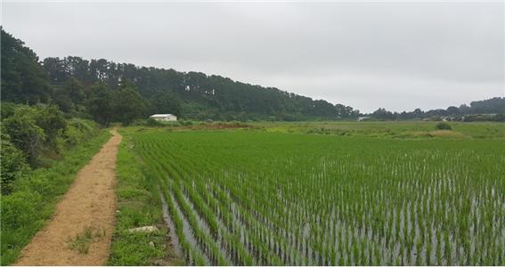 하논 논농사.png